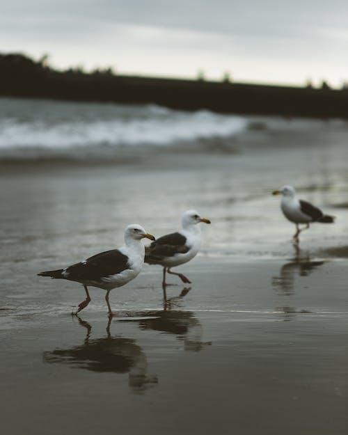 Kostnadsfri bild av djur, dyster, fiskmåsar, fjädrar