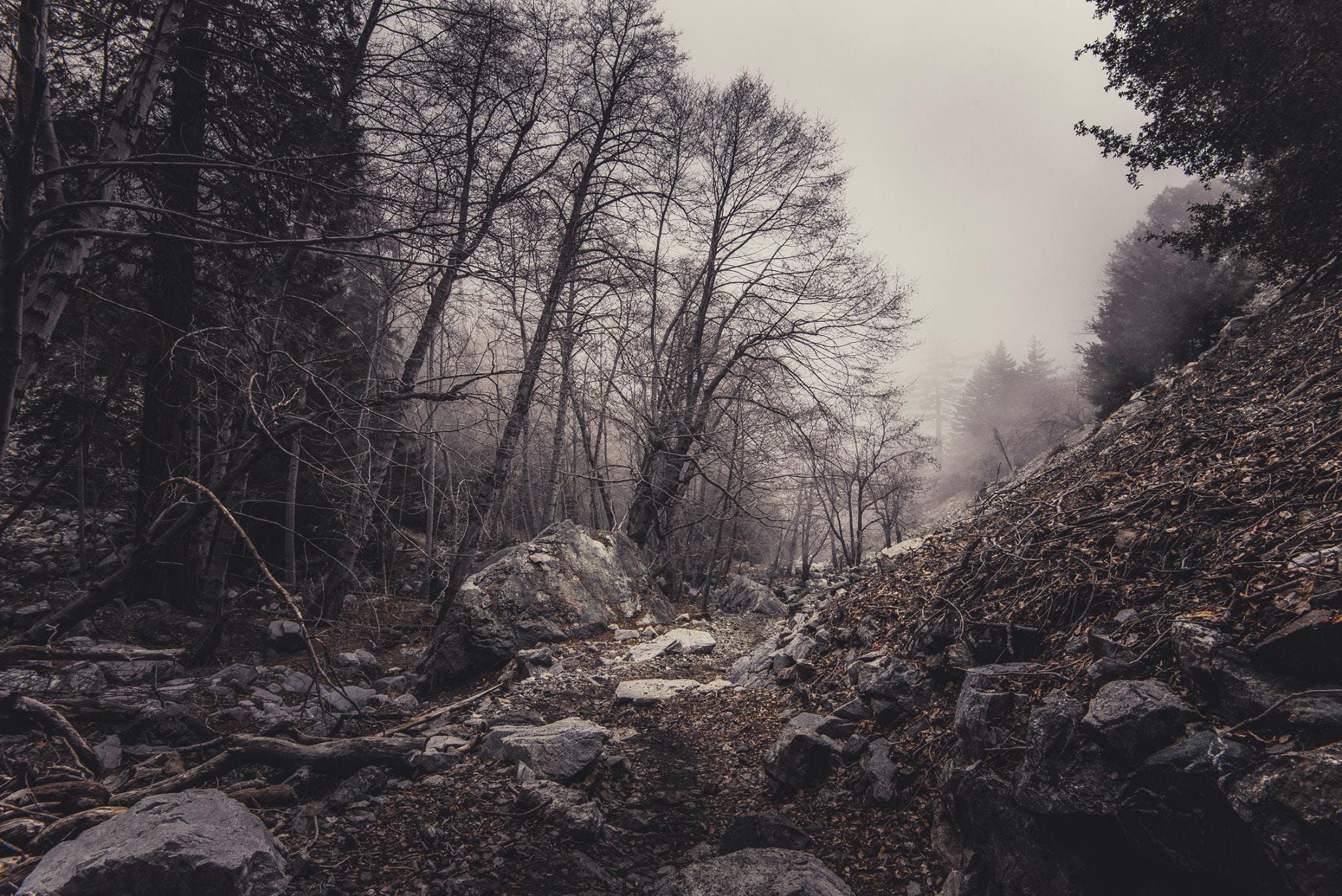 Gratis stockfoto met bomen, Bos, bossen, mistachtig