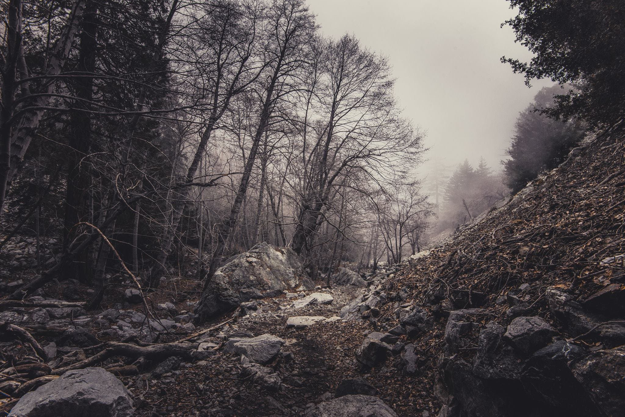 Free stock photo of nature, dirty, rocks, forest