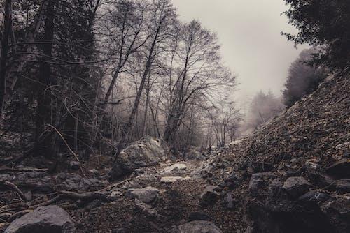 Fotos de stock gratuitas de arboles, bosque, brumoso, con neblina