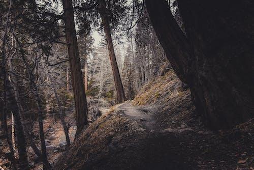 나무, 더러운, 숲, 자연의 무료 스톡 사진