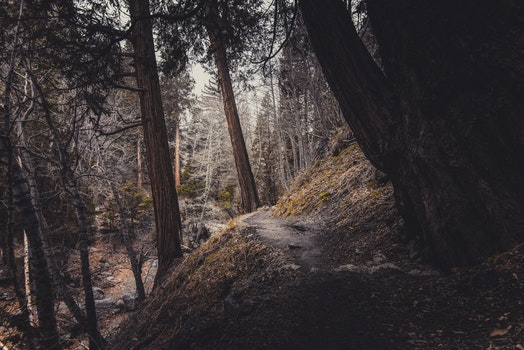 Free stock photo of nature, dirty, forest, trees