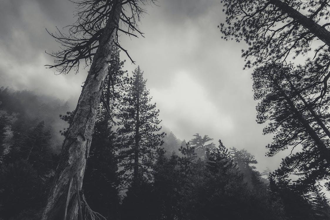 деревья, дикая природа, дымка