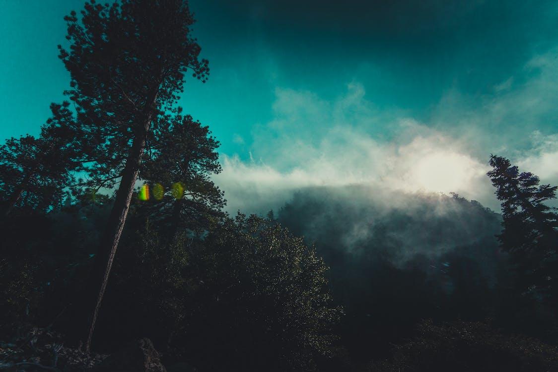 alam, berkabut, hutan