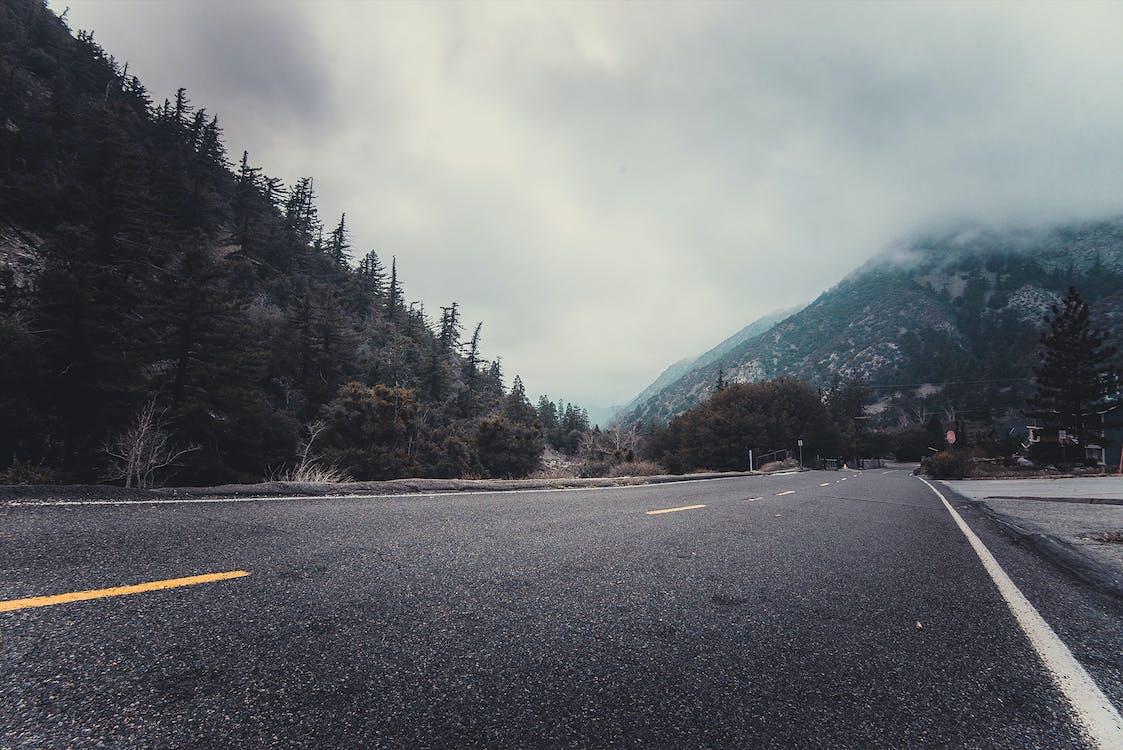 asfalt, borovice, cesta