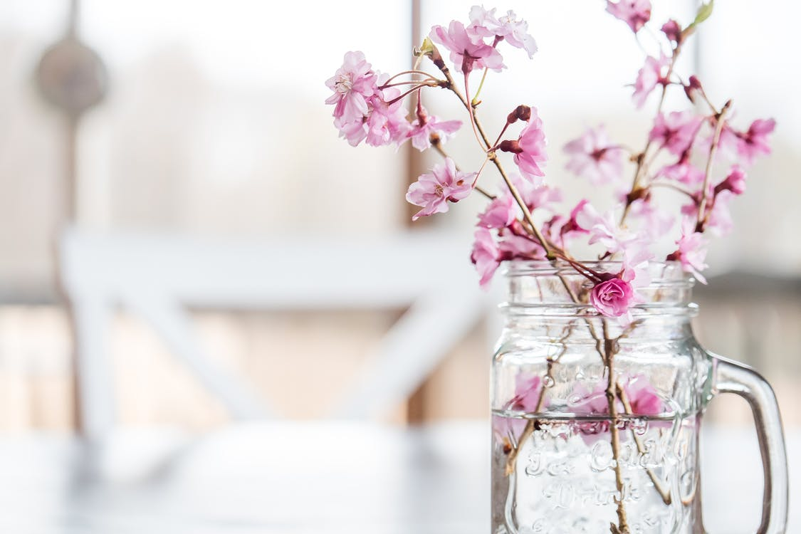 Bunch of fresh cherry tree twigs with blooming fragrant flowers of pink color placed in cut glass vase in blurred dining room