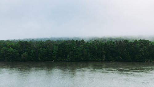 Thick mixed woodland expanded on vast river shore during rain on overcast day
