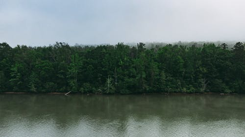 Peaceful river water flowing slowly along coast covered with green coniferous woods in mist