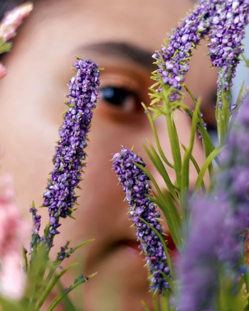 Closeup of tender lavender blossoms with young ethnic woman hiding behind in blur