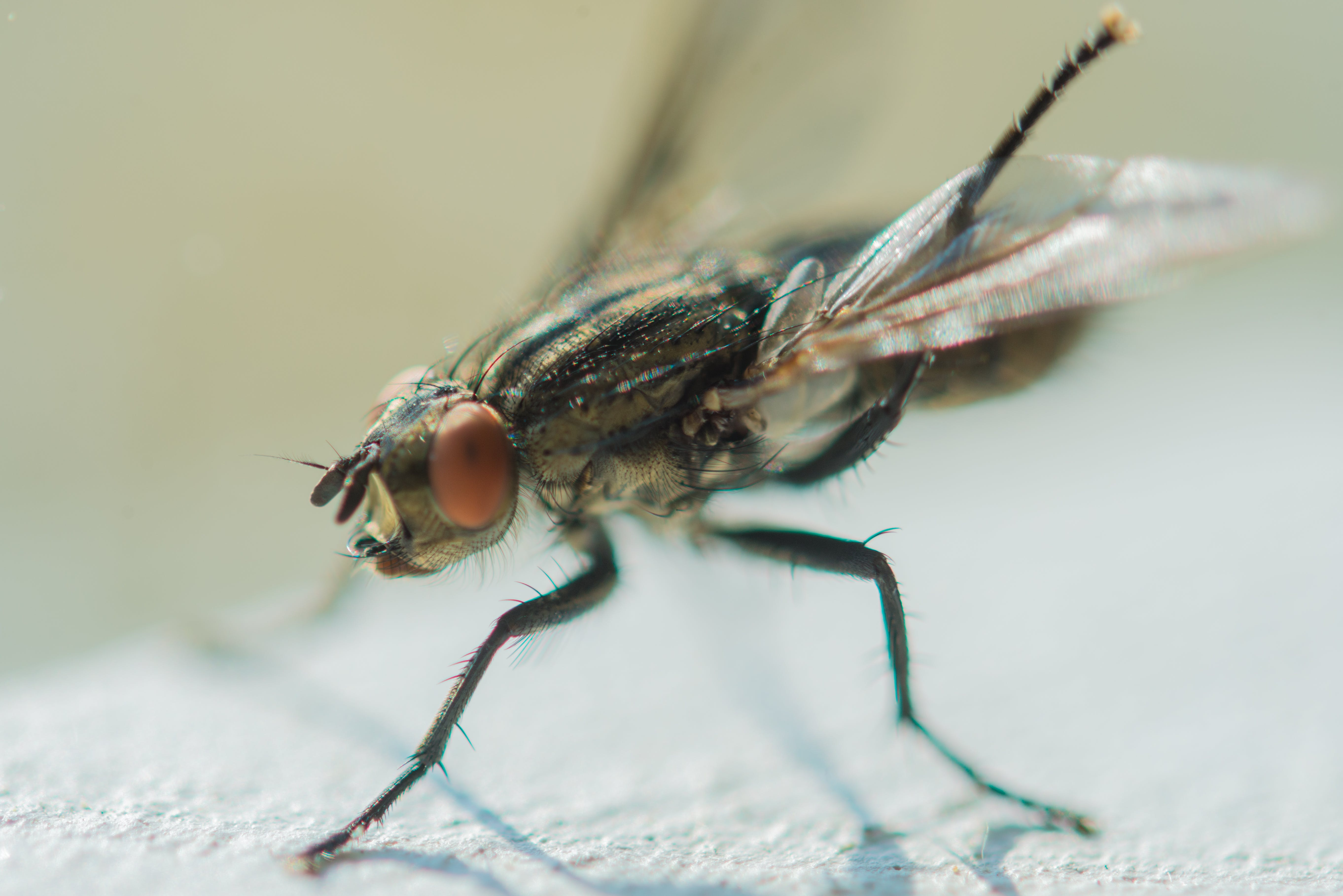 Free stock photo of legs, insect, macro, fly