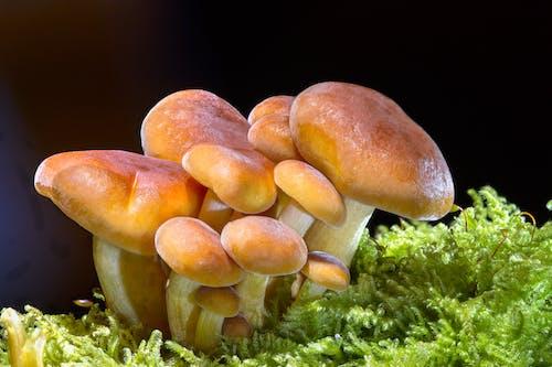 Ilmainen kuvapankkikuva tunnisteilla kasvaa, lähikuva, sieni, syötävä