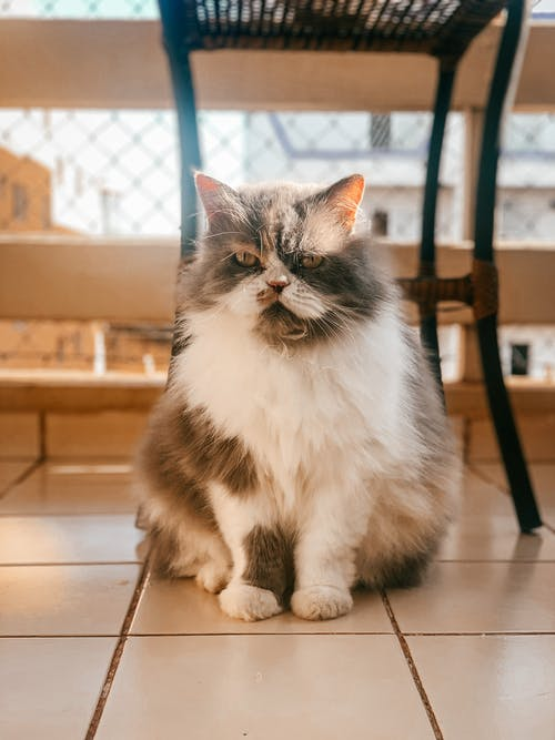 Fluffy cat on tiled floor at home