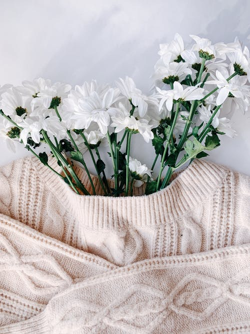 From above of white blossoming flowers with tender petals in warm sweater on desk in flat