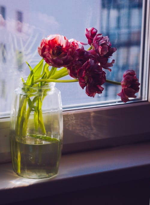 Bright red blooming flowers on thin stems in water in transparent vase near window in apartment