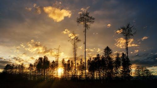 가벼운, 가을, 경치, 나무의 무료 스톡 사진