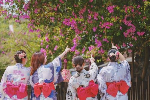 Foto stok gratis bunga, cinta, Jepang, kimono