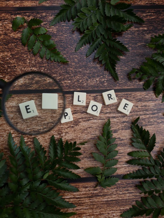 Cubes with letters near magnifying glass and green leaves