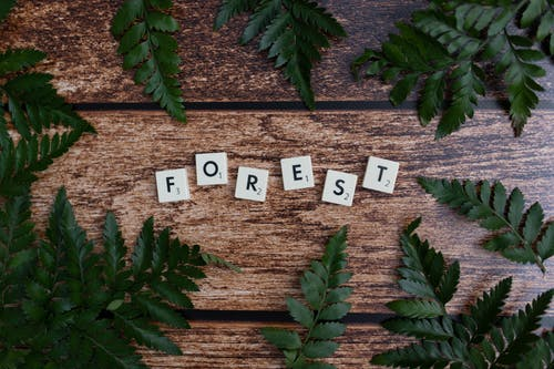 Overhead of small cubes representing FOREST word on wooden table with fern leaves with pointed edges