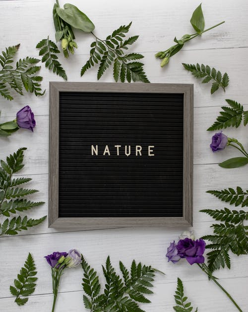 Blackboard with NATURE title near leaves and blooming flowers