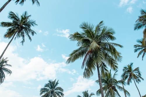 Free stock photo of beach, blue sky, coconut trees, sea