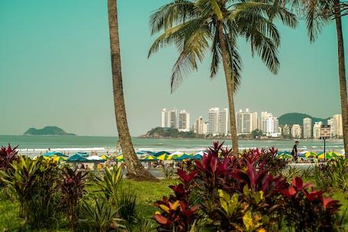 Základová fotografie zdarma na téma kokosové palmy, moře, pláž