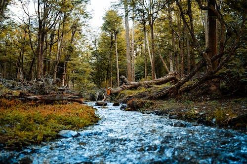 Základová fotografie zdarma na téma les, příroda, proud, řeka