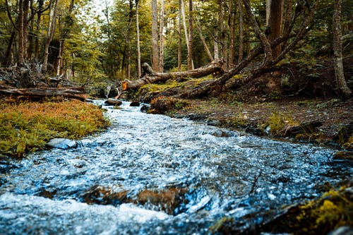 Free stock photo of forest, nature, river, stream
