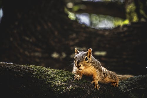 Squirrel in forest in sunny day