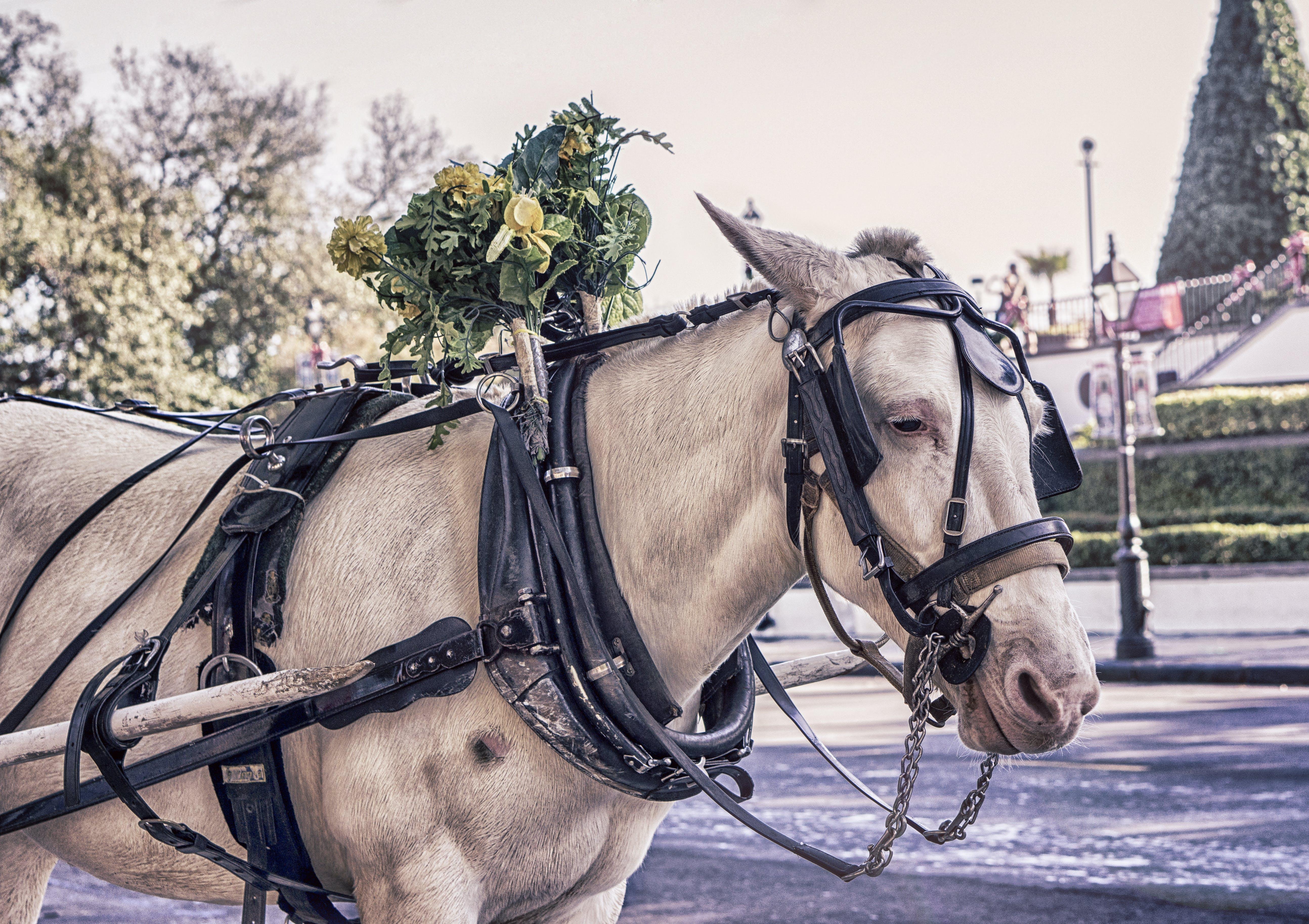 animal, carriage, coach