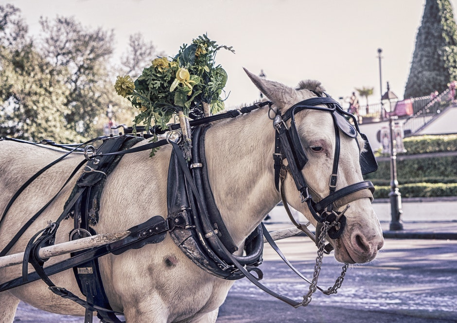 animal, carriage, coach