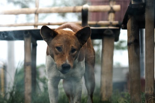 Free stock photo of baeutiful eyes, best friend, dog, evening