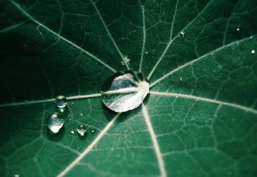 Kostenloses Stock Foto zu # весна, # зеленого цвета, # зеленый лист, # коллекция