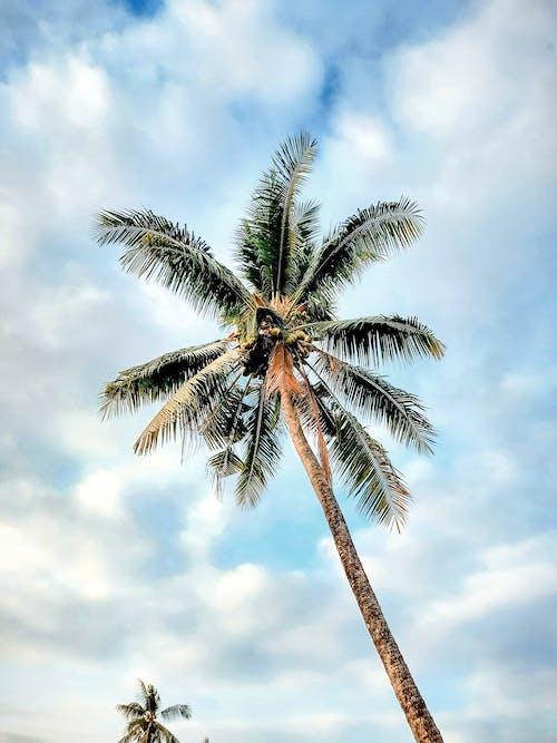 #mobilechallenge, ada, Asya, avuç içi içeren Ücretsiz stok fotoğraf