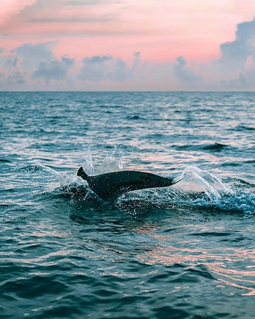 Gratis lagerfoto af bevægelse, blæser, bølge, delfin