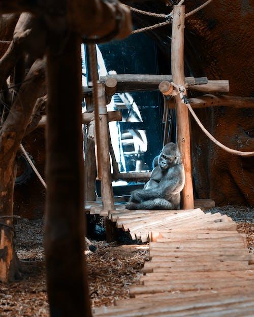 Бесплатное стоковое фото с архитектура, веревка, горилла, грязный