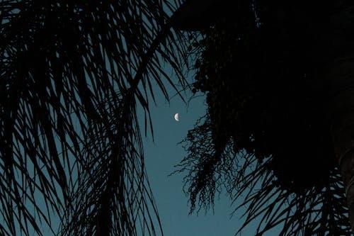 Безкоштовне стокове фото на тему «вечір, місяць, ніч»