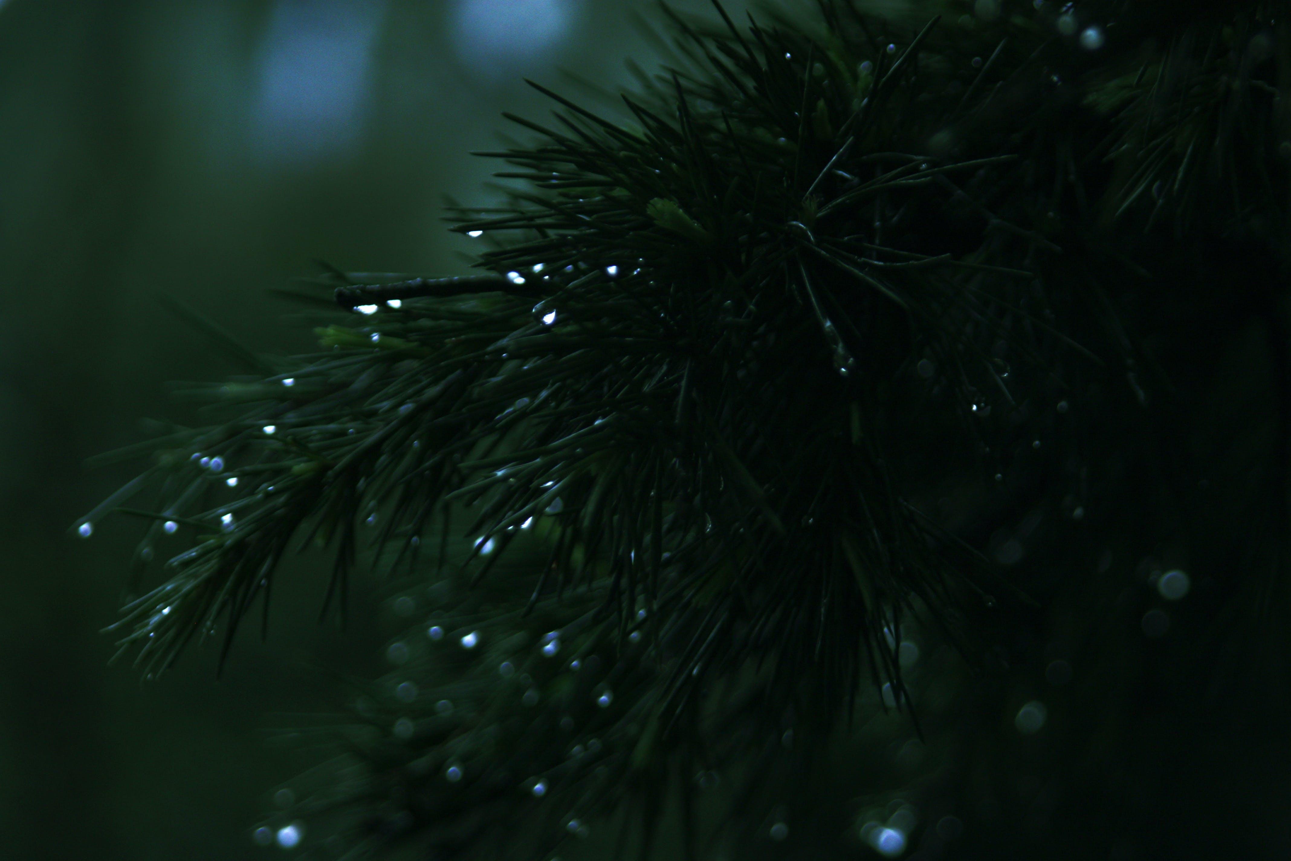 Green Needle Leafed Tree