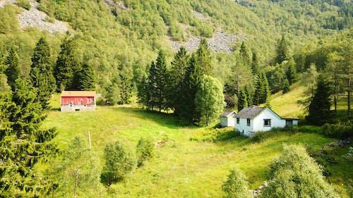 Ảnh lưu trữ miễn phí về bartrær, bjørketre, địa chỉ, dji