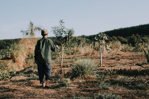 Man Standing on Cropland