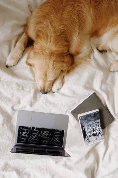 Dog with laptop and books on bed