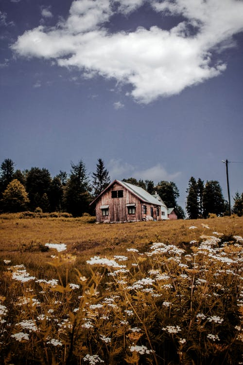 Lonely rustic house on meadow in countryside