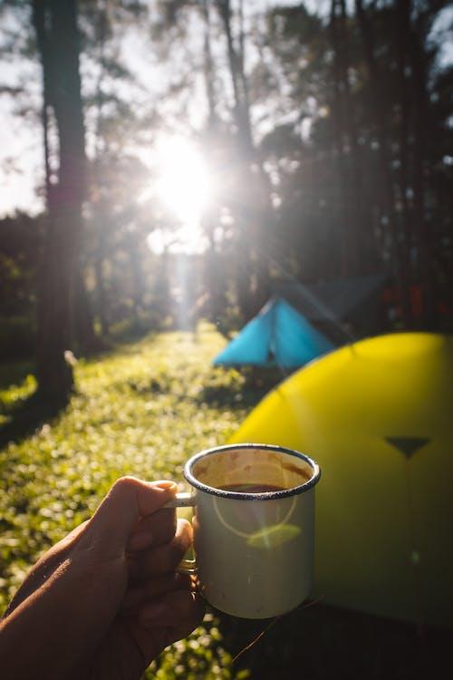 Free stock photo of camp, coffee, sunlight