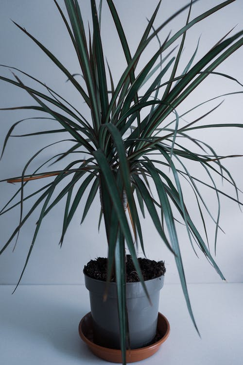 Exotic green potted houseplant on white surface