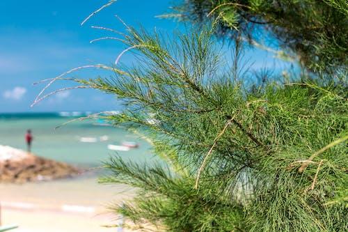 假日, 假期, 叢林, 塞舌尔 的 免费素材照片