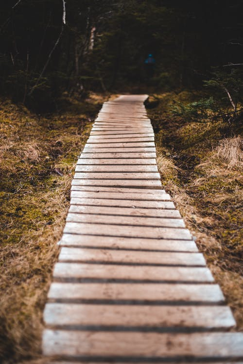 Long wooden path in green forest