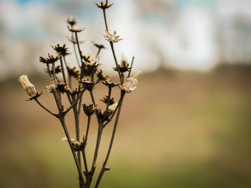 Free stock photo of beauty in nature, blurry background, dead flowers, flowers