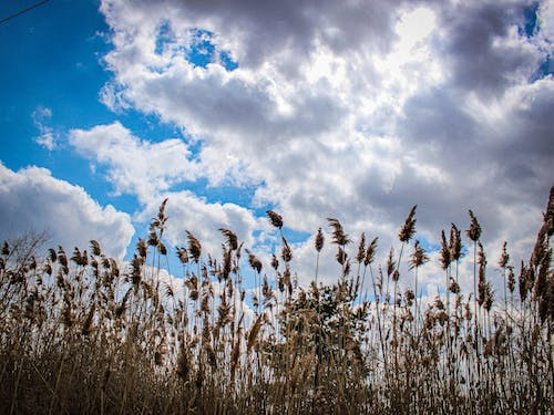 Free stock photo of cloudy, nature, plants, sky