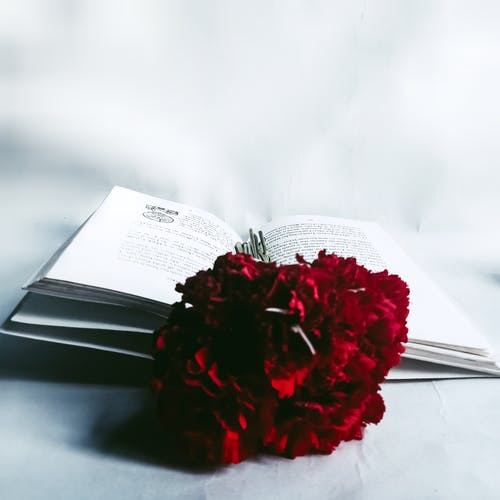 Red flower in opened book on white table