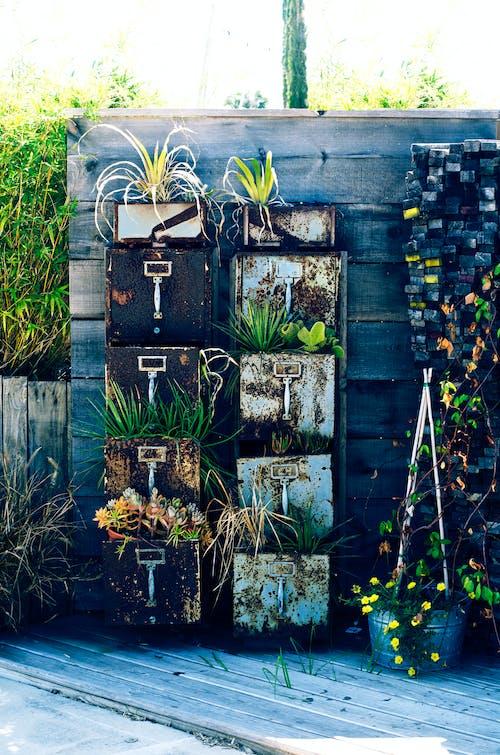 Gratis stockfoto met buitenfotografie, cactusplant, fabrieken, klassiek