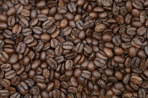 Gratis lagerfoto af afgrøde, Arabica, aroma, aromatisk